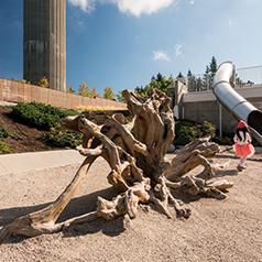 Rootwad Cedar Climber